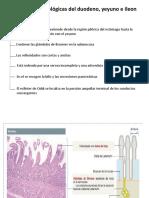 Diferencias histologicas, cells caliciformes ,motilidad y vaciamiento gastrico.pptx