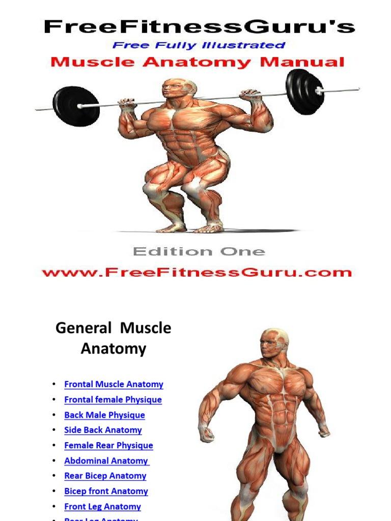 Anatomi Workout
