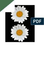 daisy.docx