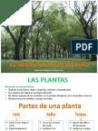 Conoce Mos Las Pl Plant As
