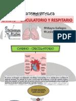 Cardio-Circulatorio