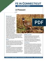Pheasant 2