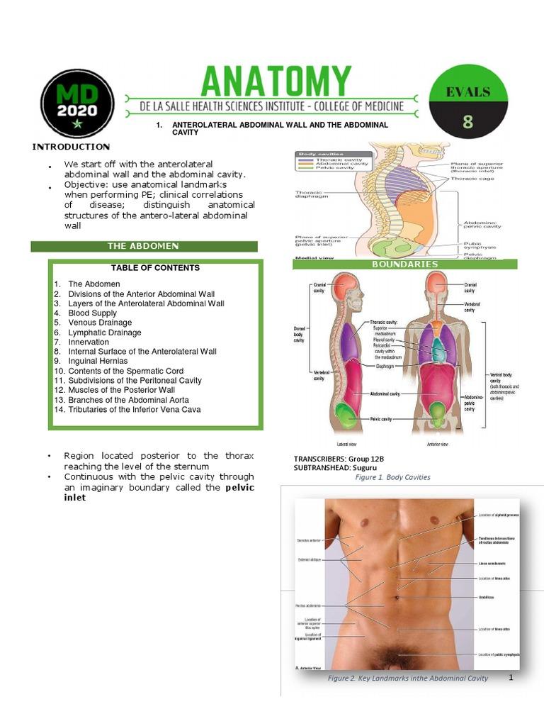 Abdominal wall edited word abdomen peritoneum ccuart Images