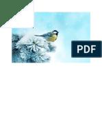 Tél, Fenyő, Cinege, Zúzmara