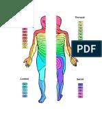 Dermatomske mape.doc