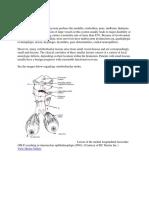 stroke vertebro basiller.docx