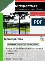 V 3gimnospermas 110518142423 Phpapp02