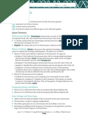 Biology 11.4 Meiosis Worksheet Answer Key - SHOTWERK