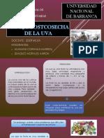 MANEJO_POSTCOSECHA_DE_LA_UVA[1].pptx
