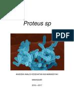 Bakteri Proteus