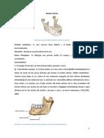 Huesos Maxilar Inferior y Temporal