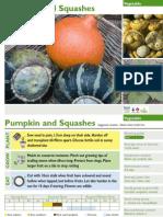 Pumpkin and Squashes