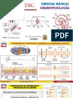 306468536-Neurofisiologia.pdf