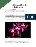Diversidad de Orquideas Del Santuario Histórico de Machupicchu