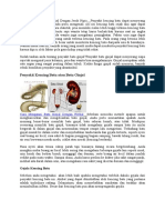 Cara Mengobati Batu Ginjal Dengan Jeruk Nipis