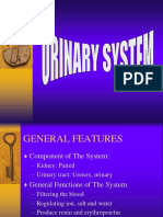 Urinary System Ss