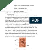 Din punct de vedere anatomic.docx