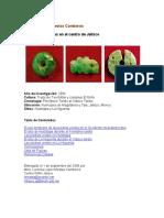 03083esLopez_Mestas01.pdf