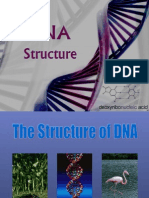 DNA Structure 1