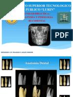 2.-Anatomia Ok Luque Mejorada
