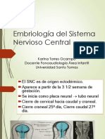 Embriologia Sistema Nervioso