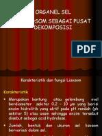 4. Organel Sel Lisosom