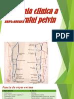 Anatomie Clinica a Membrului Pelvin
