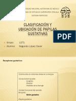 SN papilas.pptx