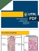 placenta1-160705004348