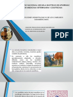 ADAPTACIONES HEMATOLOGICAS DE LOS CAMELIDOS SUDAMERICANOS.pptx