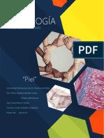 piel organos y tejidos histologia