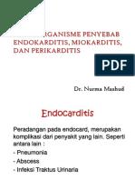 2 Mikroorganisme Penyebab Endocarditi