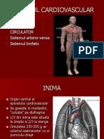 Anatomie Aparatul Cardiovascular