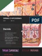 Dermis e hipodermis