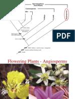 13-Flowering
