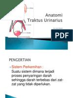 Anatomi Sistem Perkemihan pria