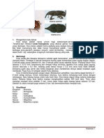 Morfologi Kutu Beras & Nyamuk