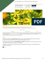 Plantas y Flores Para Rituales Mágicos Salvia, Romero, Hierba de San Juan y Ortiga