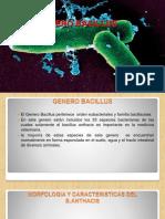 GENERO BACILLUS ANTRAX.pptx