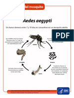 MosquitoLifecycle Sp