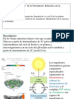 2015 BQ2 T11 Metabolismo Carbohidratos Vegetal