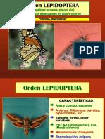 7 Sistematica - Lepidoptera