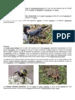 Arachnida.docx