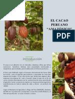 Informe Del Cacao Peruano