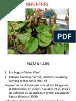 Tanaman Hias Nepenthes (II)