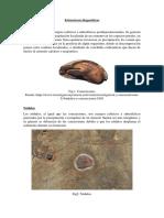 Estructuras Diageneticas Secundarias_calozuma