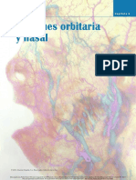 Region Orbitaria