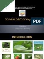 C.B-DE-CRISOPA (1)