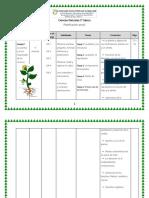 Planificación Anual ciencias tercero bàsico