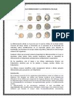 El Desarrollo Embrionario y La Diferencia Celular